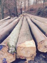 Beech Logs from Germany, diameter 40+ cm