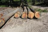 Red oak saw logs ABC