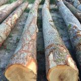 PEFC/FFC Certified Hardwood Logs - White oak saw logs ABC