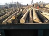 No Treatment Softwood Logs - Pine Industrial Paper Logs 20 cm