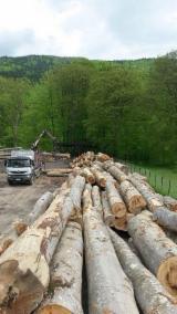 Hardwood  Logs Beech Europe For Sale - Veneer Logs, Beech (Europe)