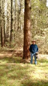 Schnittholz Und Leimholz Südamerika - Elliotiskiefer , Radiata Pine