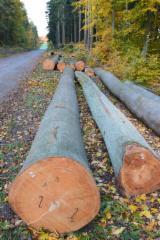 Hardwood  Logs Beech Europe For Sale Germany - Beech veneer logs from Germany