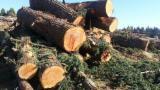 Nadelrundholz Zu Verkaufen - Schnittholzstämme, Sequoia