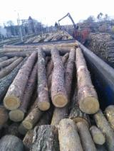 Poland Softwood Logs - Pine pulpwood 2.5m from Poland with FSC certificate 50000m3 +