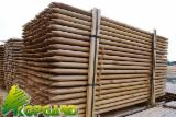 Softwood  Logs -  Conical shaped round wood, Pine (Pinus sylvestris) - Redwood