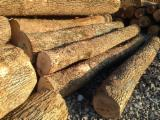 Hardwood  Logs - Ash (White Ash)
