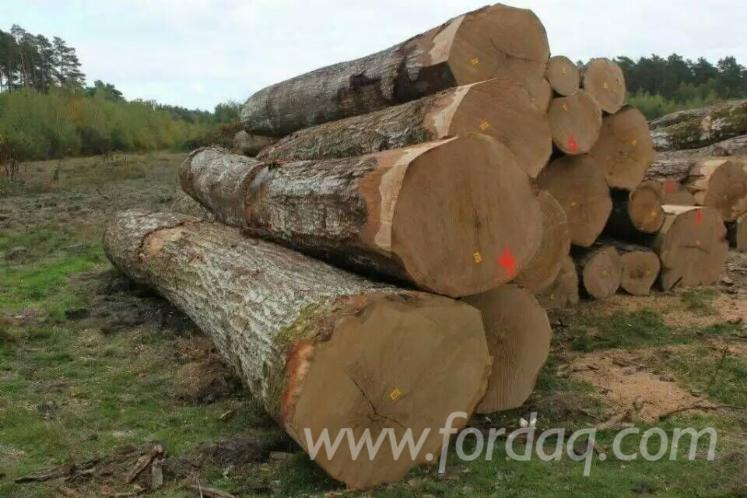 Red oak veneer logs / sliced logs