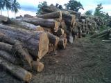 Tropical Wood  Logs - Decking wood timber logs Almendro, TEAK, Cumaru, Amarillo, Cedar, Amargo Bitterwood, Nispero, Santos Mahogany, Ipe, Zapatero, Quira, Granadillo, Dragonwood,