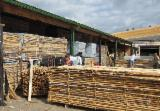 Hardwood  Sawn Timber - Lumber - Planed Timber Birch Europe - ABC Grade - unedged white birch lumber - Fresh