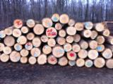 Hardwood  Logs For Sale - American White Ash Logs