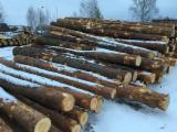 Softwood  Logs For Sale - Pine logs 30+cm