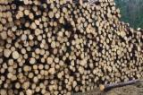 Softwood  Logs Spruce Picea Abies - Whitewood - Spruce logs 14+cm