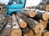 Hardwood Logs For Sale - Register And Contact Companies - Birch Logs 20+cm