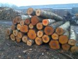 Hardwood Logs For Sale - Register And Contact Companies - Birch Logs 26+cm