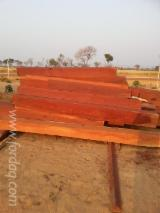 Sawn Timber ISPM 15 - Hardwood MOSSIVI GIRASSONDE for sale