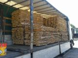 Softwood  Logs All Coniferous - Fresh sawn timber