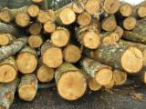 Tropical Timber For Sale - Find Your Business Partner On Fordaq - Teak boules for sale from Croatia