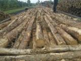 FSC Certified Softwood Logs - Pine 2.5m pulpwood - European countries - 100000cbm solid/year with transport
