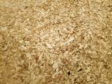 Firewood, Pellets And Residues Poplar - Poplar Wood Chips From Sawmill 40/50 mm