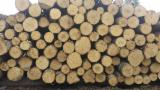 Hardwood  Logs Demands - aspen logs wanted