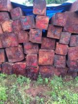 Tropsko Drvo  Trupci - Za Rezanje, Xylia dolabrifornus, Kambodža