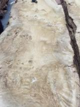 Sliced Veneer - Oak (European), Flat cut, burl, Natural Veneer