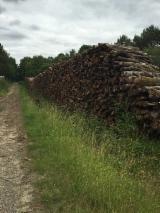 France - Fordaq Online market - Firewood, Oak (European)