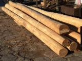 Hardwood  Logs For Sale Poland - construction round beams, Acacia, FSC