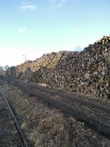 Softwood  Logs For Sale Poland - Pine pulpwood ca.18000m3/month, 2,5m available