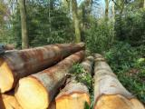 Hardwood  Logs Demands - Oak (American Red - Origin: Europe ) request