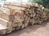 Tropical Logs importers and buyers - Buying Kosso squared logs, no sap, no bark, no rot