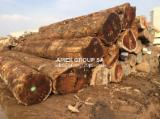 Tropical Wood  Logs For Sale - Doussie logs (Afzelia bipindensis)