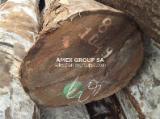Tropical Wood  Logs - Pao Rosa logs (Swartzia fistuloides)