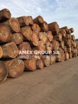 Tropical Wood  Logs - Tali logs (Erythrophleum guineense, ivorense)