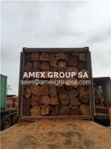 Tropical Wood  Logs For Sale - Kosso square logs (Prerocarpus erinaceus, africanus)