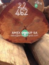 Tropical Wood  Logs For Sale - Niove logs (Staudtia stipitata)