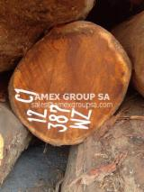 Tropical Wood  Logs - Bilinga logs (Nauclea diderrichii)