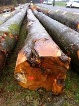Hardwood  Logs Acacia For Sale - Peeling grade, beech logs BC