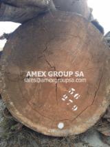 Tropical Wood  Logs - Andoung logs (Monopetalanthus spp.)