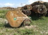 Tropical Wood  Logs - Izombe logs (Testulea gabonensis)