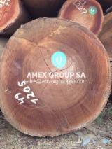 Tropical Wood  Logs - Dabema logs (Piptadeniastrum africanum)