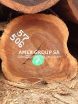 Tropical Wood  Logs - Eyoum logs (Dialium bipidense, dinklagei, aubrevillei)