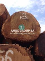 Tropical Wood  Logs - Movingui logs (Distemonanthus Benthamianus)