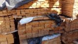 Nadelschnittholz, Besäumtes Holz Fichte Picea Abies  - Kiefer  - Föhre, Sibirische Kiefer, Fichte