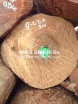 Tropical Wood  Logs - Alep logs (Desbordesia glaucescens, insignis)