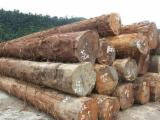Hardwood  Logs Beech Europe For Sale - Tali round logs for sell