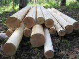 Denmark Softwood Logs - Offer for supply of fir,beech, pine, eucalyptus and others kinds of wood chips and logs