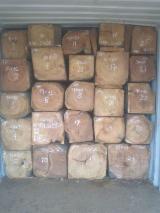 Tropical Wood  Logs - Sale Doussie Rough Square