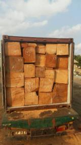 Forest And Logs Africa - Sale Kosso/Rose wood Rough Square origin from Ghana